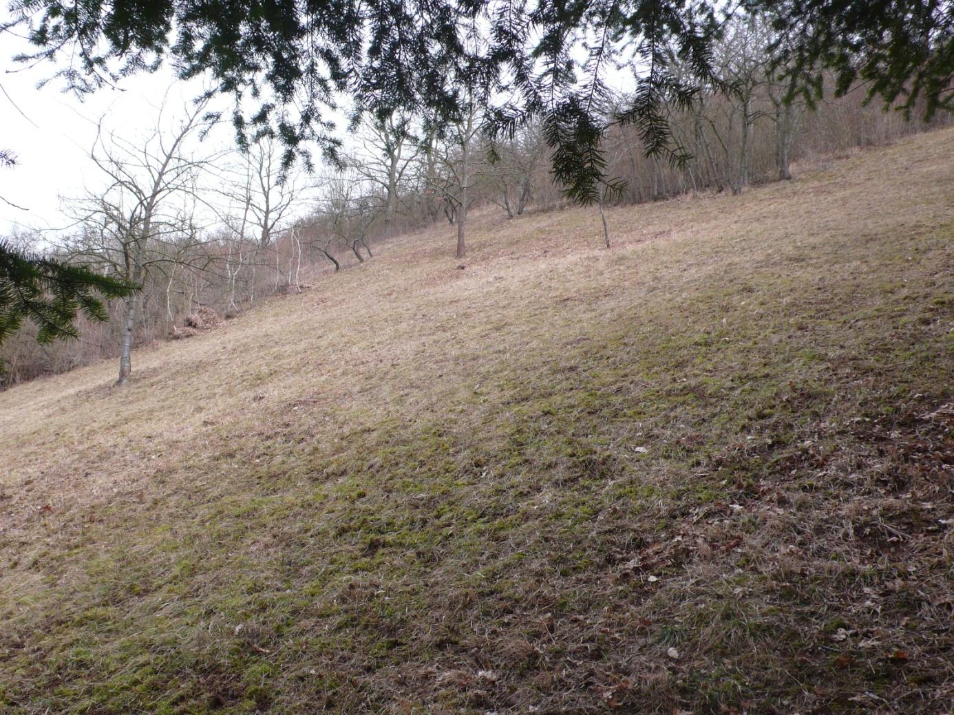 C:\Users\Hans\BUND, Naturschutz\Biotoppflege, Fotos\HTR, Blick aus dem Douglasienwäldchen auf die hintere Pflegefläche.JPG