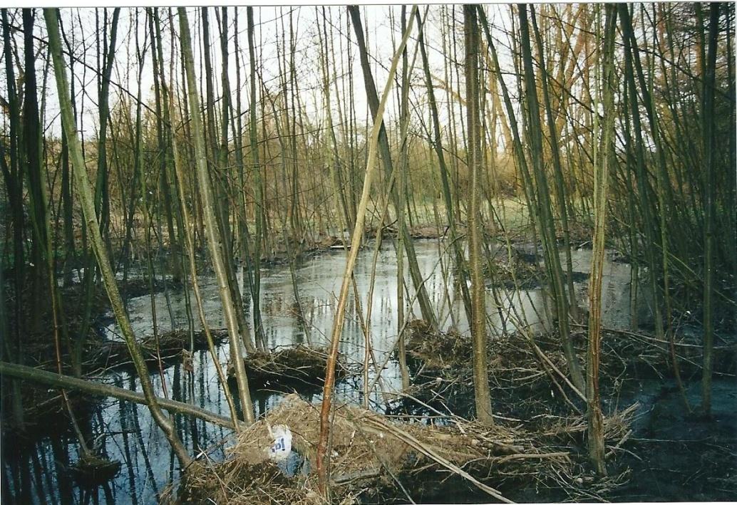 C:\Users\Hans\Pictures\Bilder der Präsentation\Auwald am Guldenbach bei Hochwasser.jpg