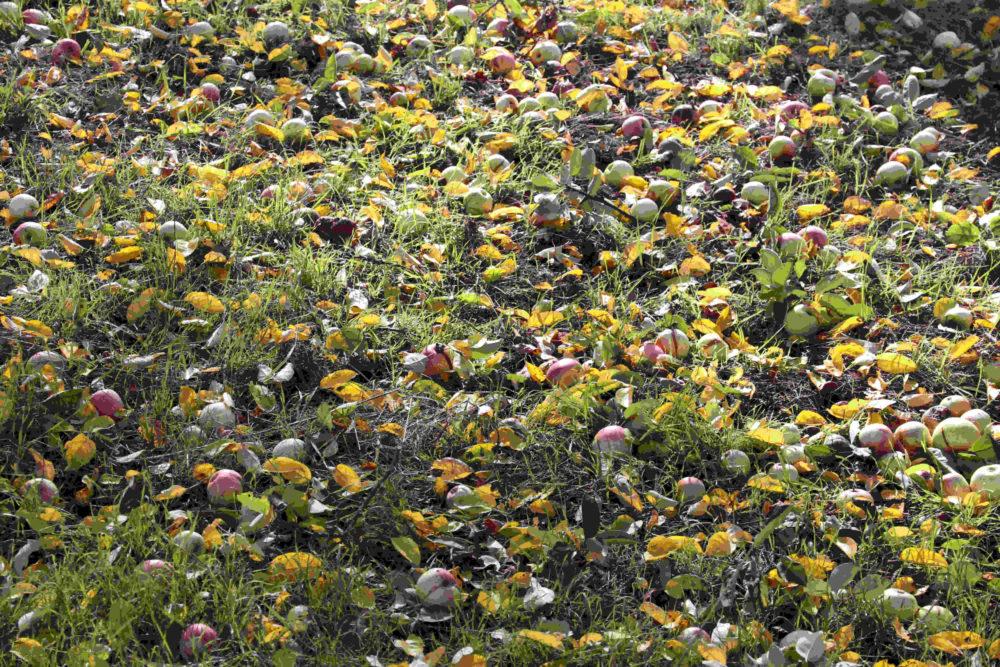 Apfelwiese im Herbst