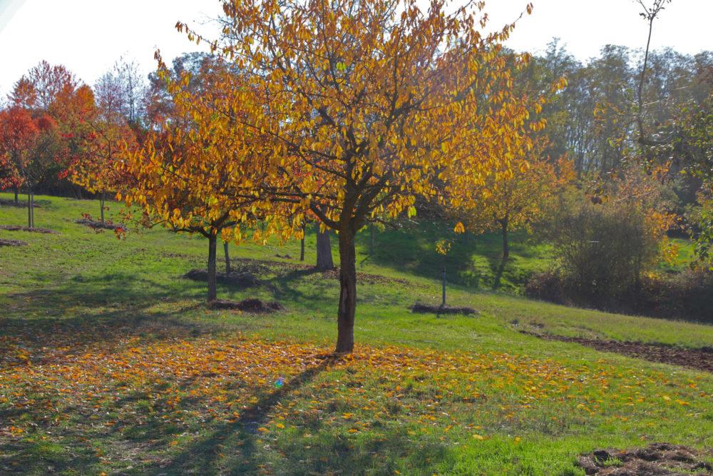 Obstwiese im Herbst